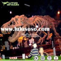 Natural Science Museum Exhibition Life Size Dinosaur Skeleton for Sale