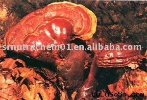 Reishi Powder( ganoderma lucidum powder)