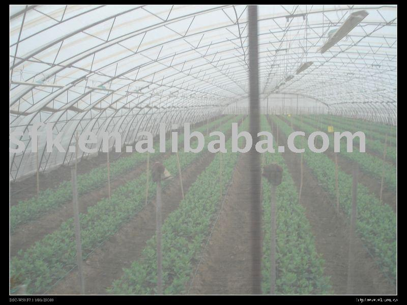 Single Greenhouse