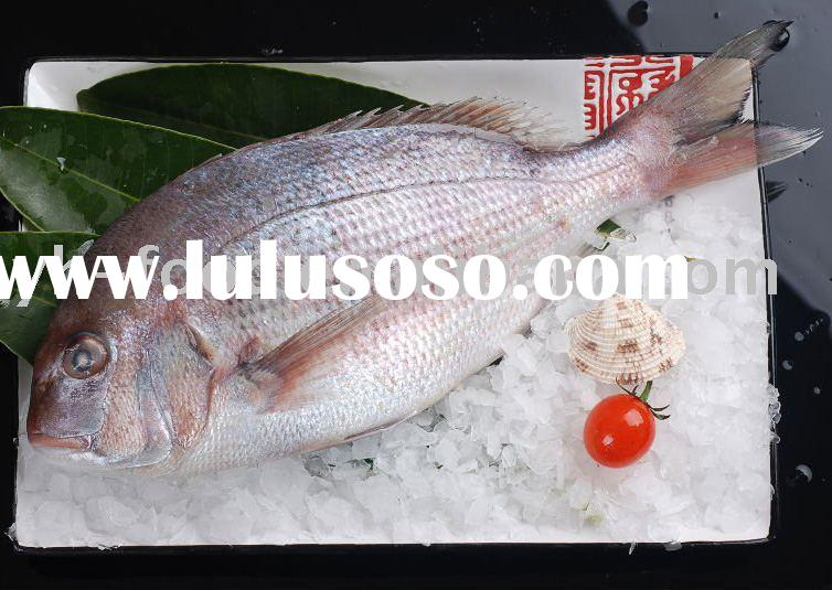 best quality frozen fish sea bream