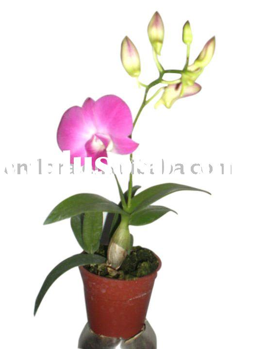 Indoor flowering plants gallery - Indoor flowering plants ...