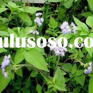 Various Application Quality Patchouli Oil