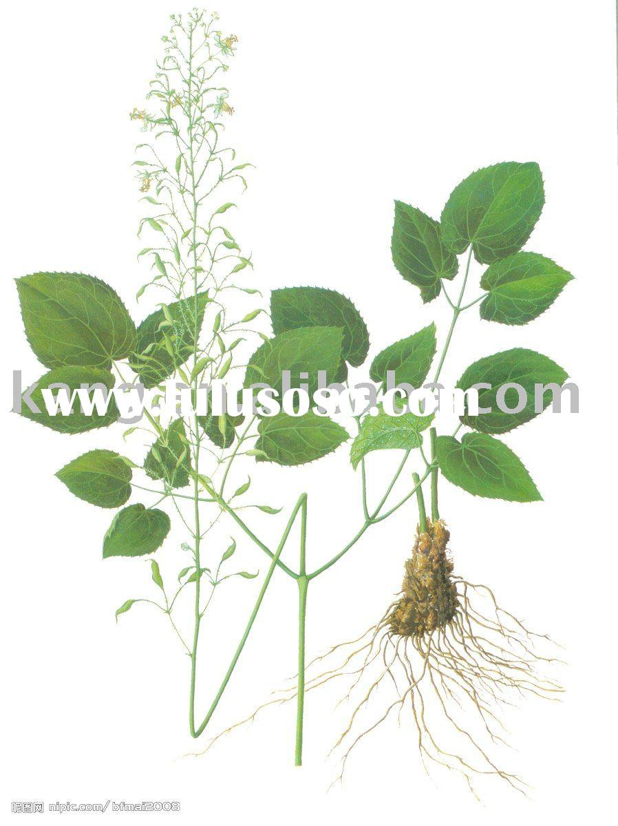 Horny goat weed plant extract. 5~90% Icariin (natural extract powder manufacturer)