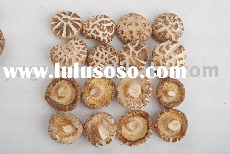 China organic green food dried shiitake mushroom