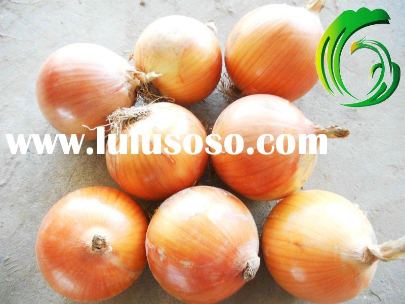 Fresh Gansu yellow and red Onion 5-8cm & 8cm up