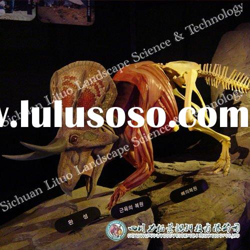 Dinosaur Fossil for Museum Exhibition of Triceratops Muscle Tissues and Bone