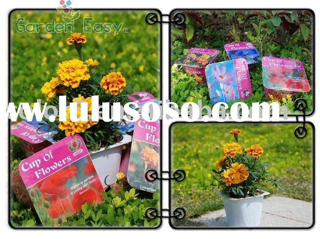 DIY Plastic Flower Pot,Garden Decoration,Plastic Pot,Mini Pot,Flower Planter