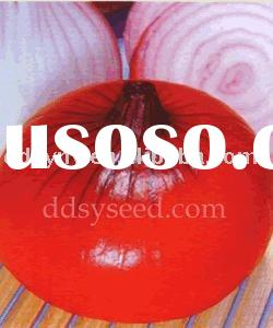 Hong Ri onion seed , Red Sun onion seed