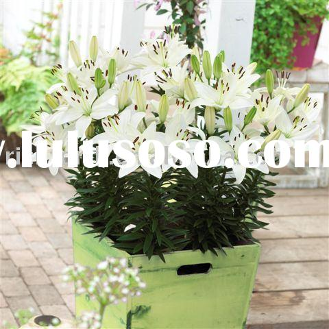 Sell flower pot,garden pot,spot goods,flower basket,flower vase,gift basket,wooden crafts,arts and c