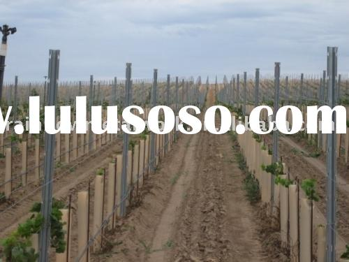 Galvanized Steel Vineyard Posts for Plantation