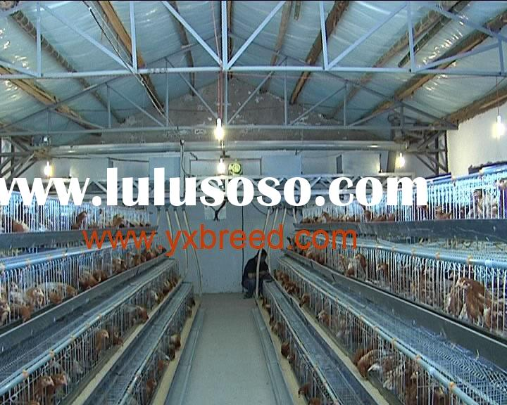 poultry feed processing equipment