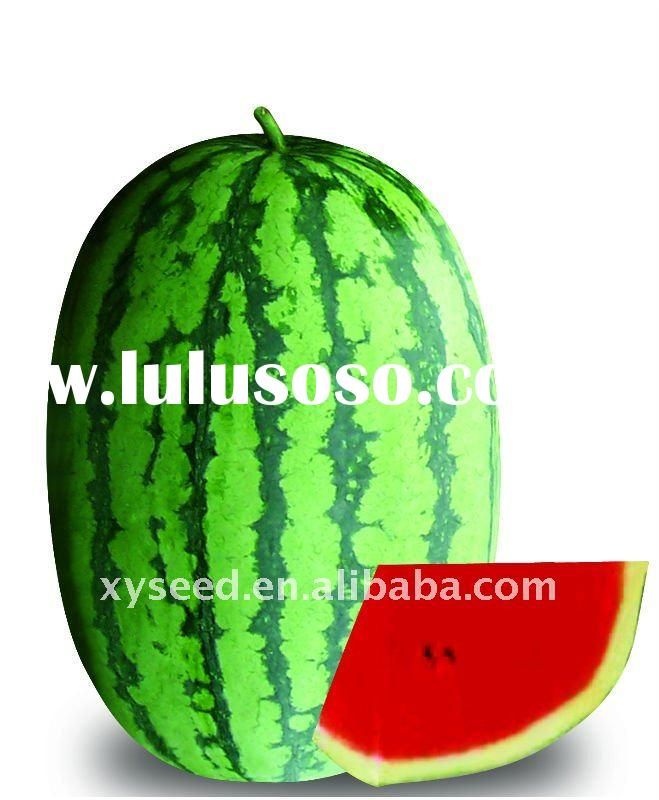 hybrid vegetable watermelon seeds