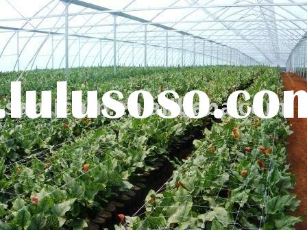 Agricultural Commercial Greenhouse