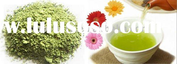 Green Tea/green tea powder / organic green tea