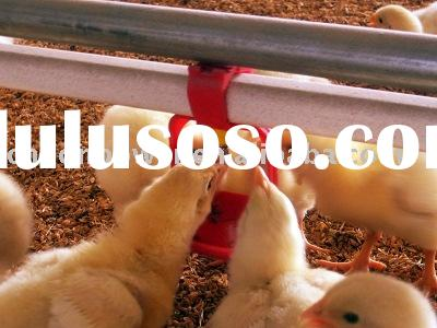automatic poultry feeder for broiler and breeder