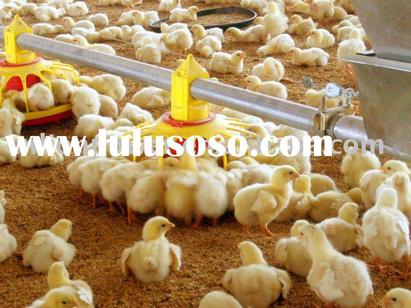 automatic poultry feeder for chickens
