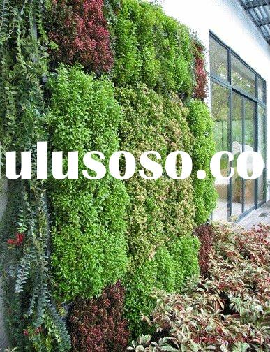Enjoy your new green wall- SAP Water saving gel for wall plants