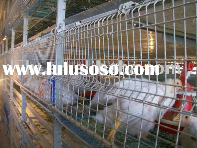 automatic poultry equipment,chicken layer cage,chicken cage