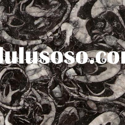 Natural Granite Seashell Tiles,Slabs,Countertops,Vanity Tops,Bar Tops,Table Tops,Wall Cladding