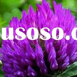 Plant extract Red Clover P.E 8%20%40%