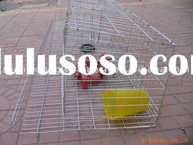 low carbon steel wire layer chicken cages with Auto water system