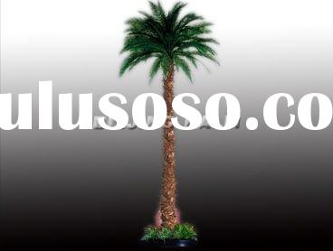 preserved date palm tree for Indoor , artificial palm tree