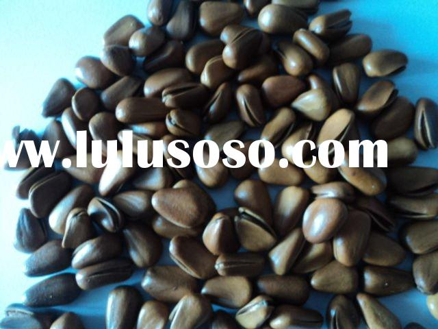 Pine Nut for sale