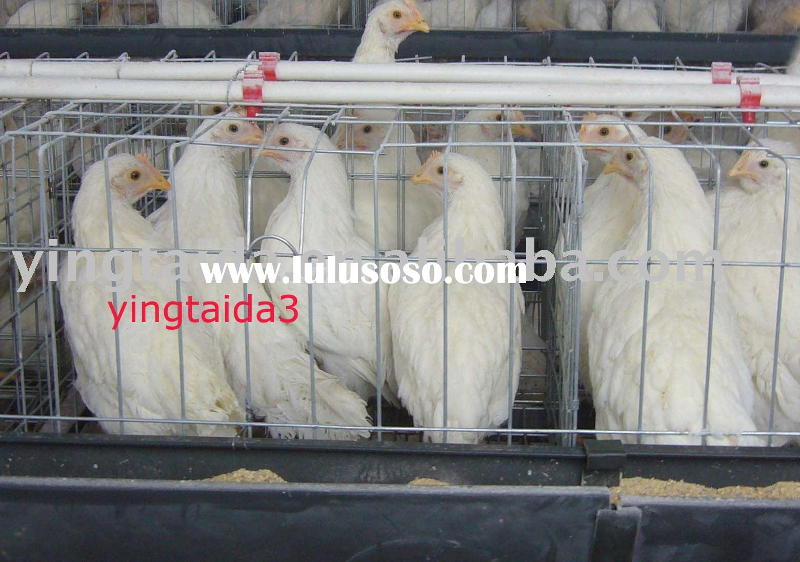 chicken cage,cage, chicken laying cage,layer chicken cage,poultry cage,coop,ladder type chicken cage