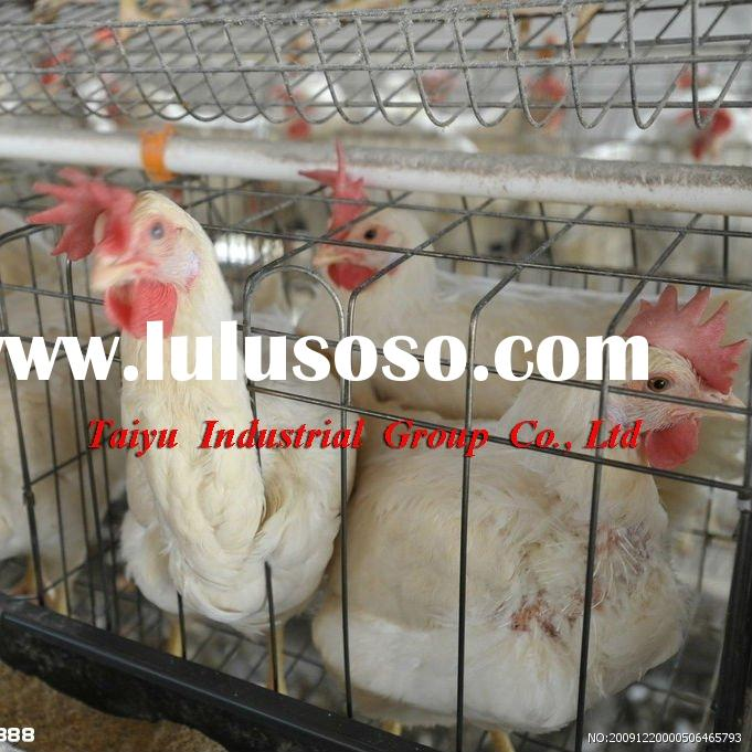 layer poultry cages for Nigeria/africa