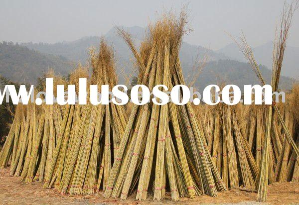 Natural bamboo sticks/ bamboo canes/ bamboo poles/ best price & wholesale