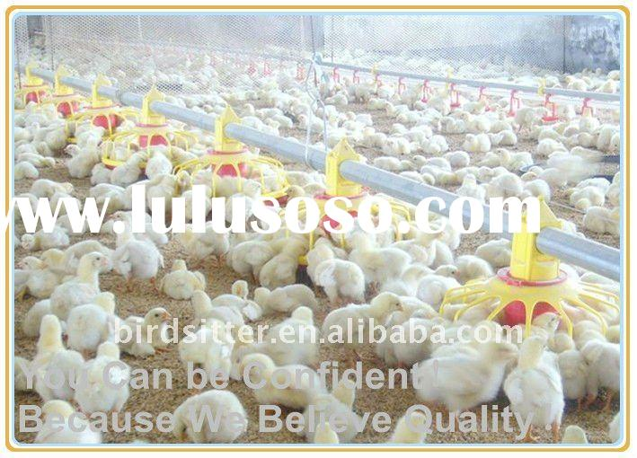 automatic poultry farm equipment for broiler and chickens