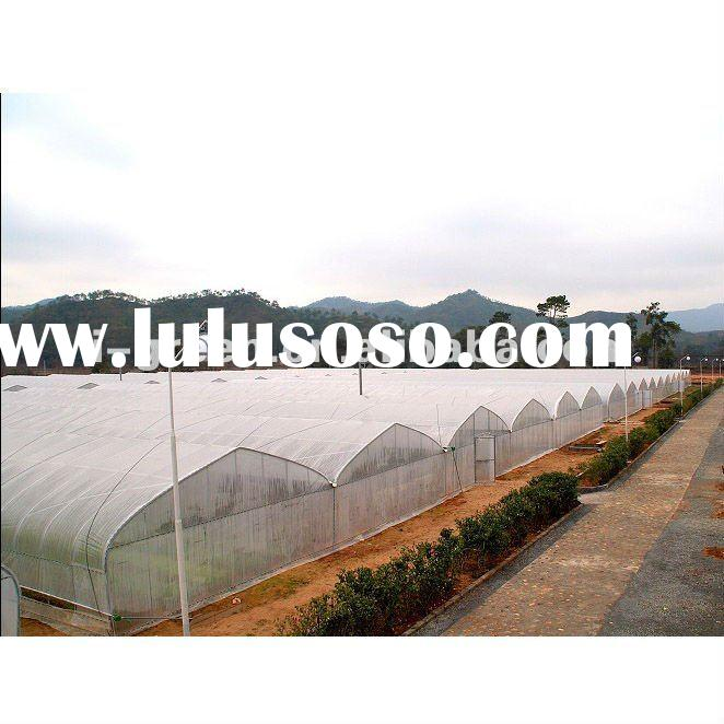 Multi-span economical plastic commercial greenhouse