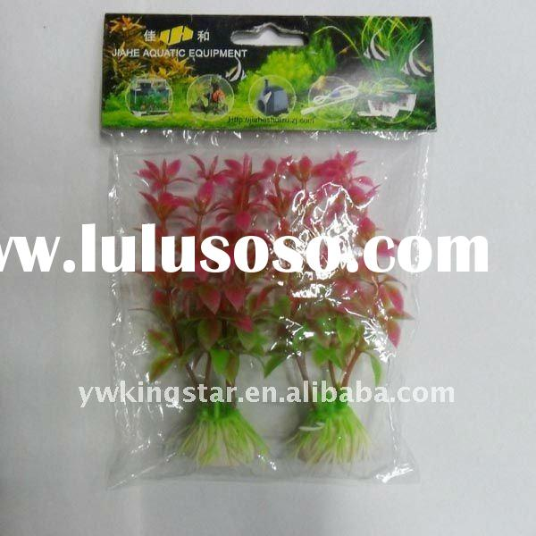 Free Sample - Indoor Aquatic Plant