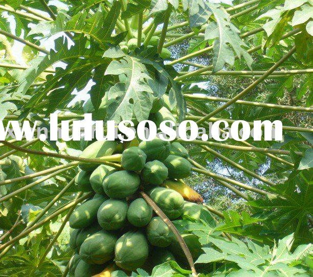 Carica Papaya Leaf Extract