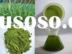 Organic Barley Grass Juice Powder(Barley Grass Extract) 25:1