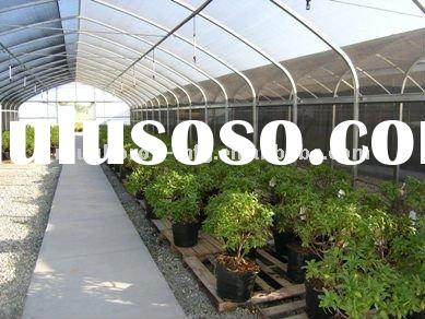 rose multi span poly film tunnel greenhouse