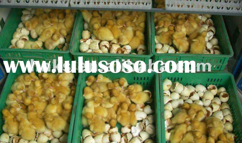 2000-3000 eggs small incubator/chicken egg incubator/duck egg incubating machine