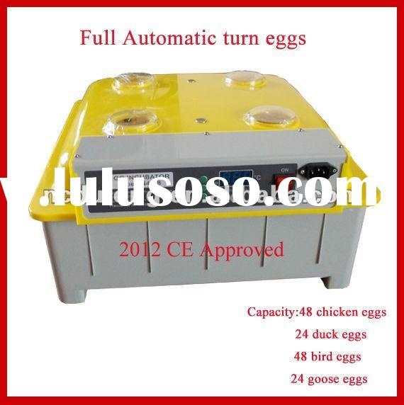 CE approved fertilized eggs for sale