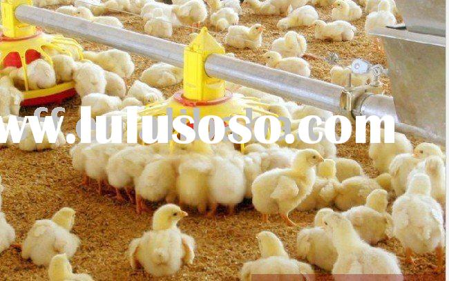 poultry house equipment poultry equipment manufacturer