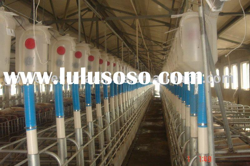 auto feeding system for pigs