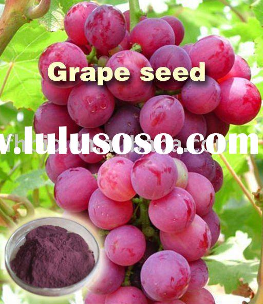 Grape Seed Extract Powder with OPC 95%,98%