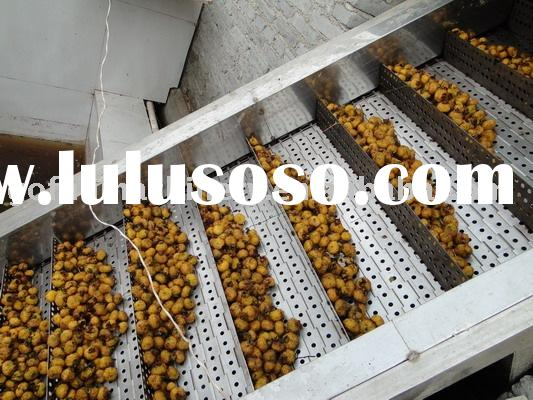 Fruit processing machine (Fruit Elevator,Fruit and Vegetable Processing Plant)