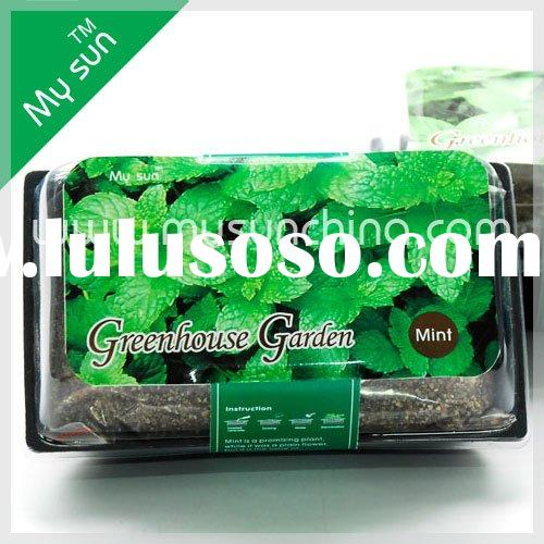 Green house garden,green plant,seeds in plastic box