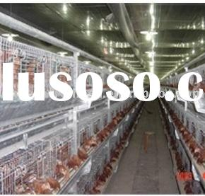 chicken poultry cages