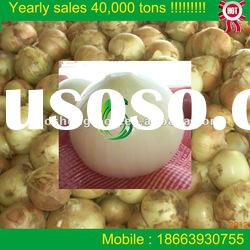 2012 new crop fresh yellow onion