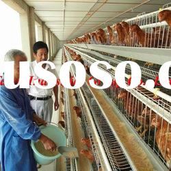 chicken cage for poultry farm