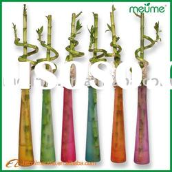 Colorful straight & spiral Lucky Bamboo plants