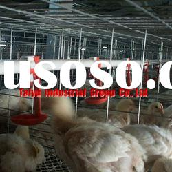 egg laying chicken farming cages for birds in sales (full Auto Drinkers and feeders)