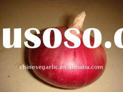sweet unforgetable red onion China 2011