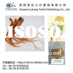 Angelica root extract powder--plant extract manufacturer in chinese (GMP.HACCP)